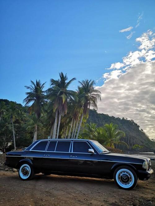 JACO-BEACH-PALM-TREE-LIMOUSINE-COSTA-RICA.jpg