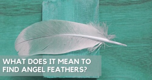 angel-feathers-1.jpg